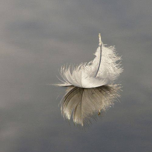 This Unlit Light - Swan Feather by Jim Champion