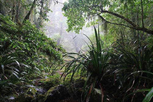 Rainforest Hermitage