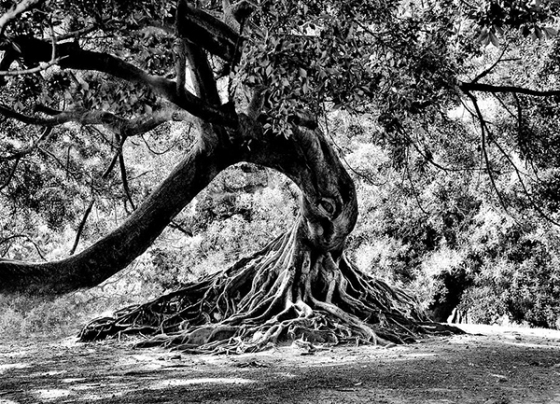 Tree of Life: photograph by Kenneth Mucke