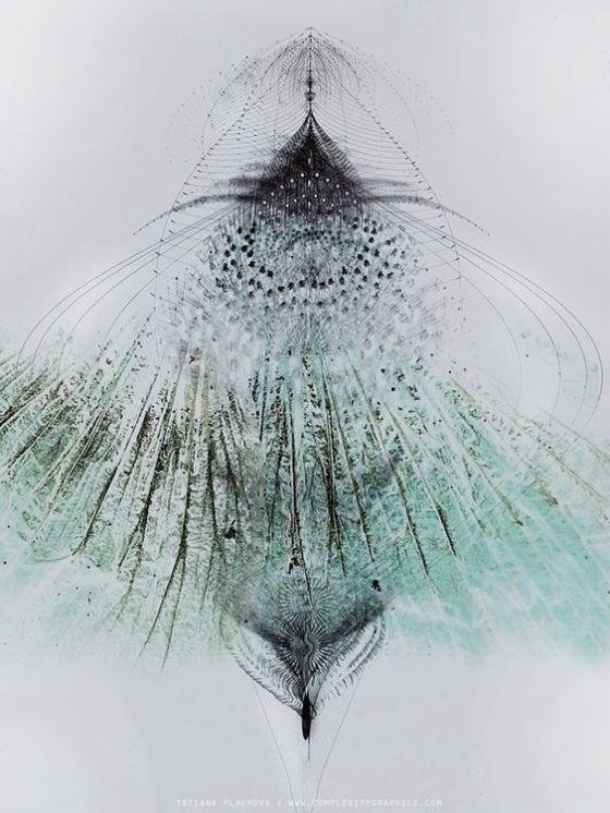 Tatiana Plakhova - Flowerwings